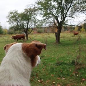 牛に睨まれた日
