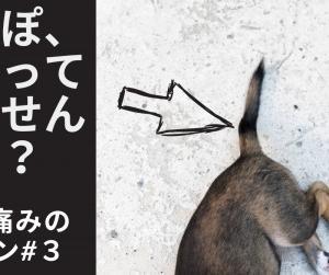 しっぽが曲がっていませんか?|犬の痛みのサイン#3