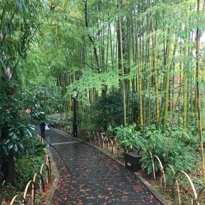 伊豆の旅  竹林の小径