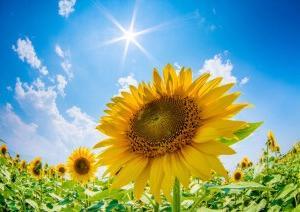 心のまま…浄化日和