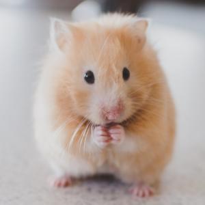 マウスの便利な裏ワザ ~ ミドルクリック