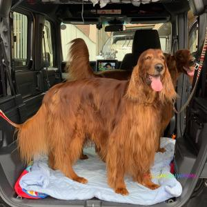 大型犬が悪者になること多々あり…。