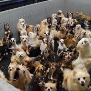 犬猫の飼育管理の数値規制に対してもっと厳しい要望を環境省に送りましょう!