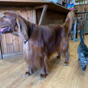 お泊まりの犬たちと保護猫たち