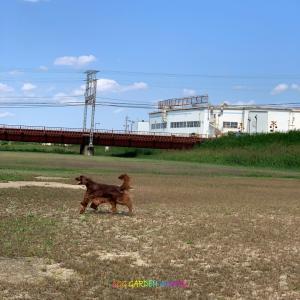 犬はたくさん走らせてやらないとね!