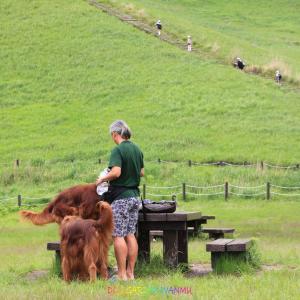 とっても緑が綺麗な曽爾高原に愛犬と!