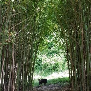 竹林とジージャとトスカーノ。