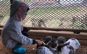ウサギ当番