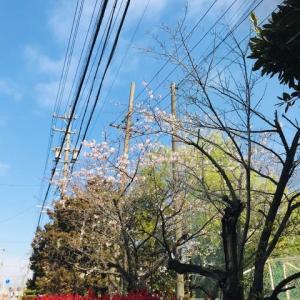 春〜よ〜来い コロナ〜よ〜去れ〜