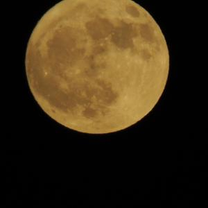 まんまるお月様~♪