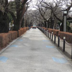 新年最初のお散歩!!(1)令和さんぽ 2020年1月