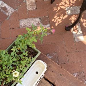 水はけ用穴のない鉢に穴を開ける/9月のパティオガーデンの様子