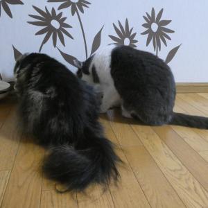 猫あるある(食事編)