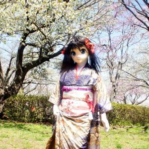 着ぐるみ達は雛祭りするの?/Do kigurumis celebrates Hina-matsuri?