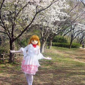 着ぐるみでお花見画像。その2/kigurumi doll with cherry blossoms act2