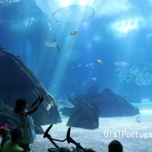 リスボン水族館に行ってきた(2)