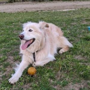 レンタル犬