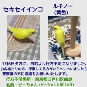 福岡への移住