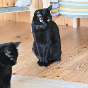 黒猫カフェ