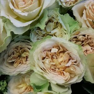 素敵なベージュのバラ