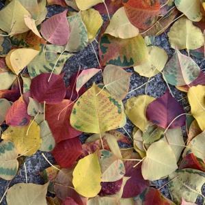 落ち葉で秋色のまあるいテーブル❤️