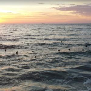 マンハッタンビーチでシーフード  Fishing With Dynamite