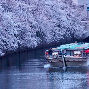 「大岡川桜まつり」実行委員会様と、2011年3月28日の桜