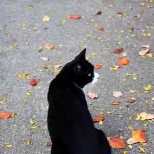 猫と葉っぱと~その1~