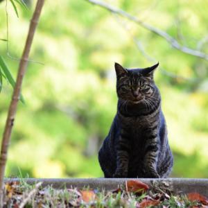 猫と葉っぱと~その2~