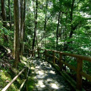 奈良県~蜻蛉の滝~