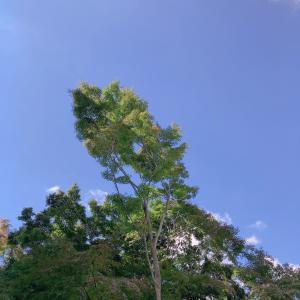 青空散歩の後のメロンソーダ