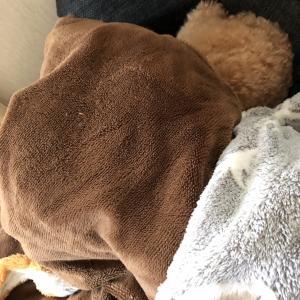 昼寝する犬の謎