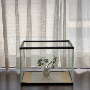 キアゲハの赤ちゃん