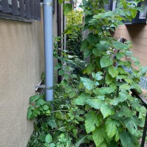 剪定と除草をしてお庭を綺麗に