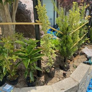 移植や植栽