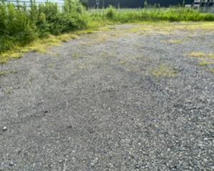 種が落ちる前に工場草刈