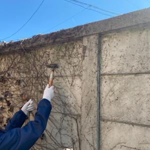 壁のツルを楽に取る方法