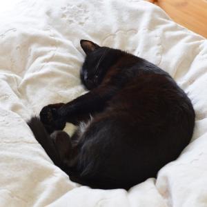 黒猫の病院ストレス