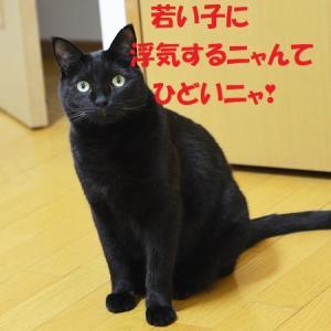 黒猫は嫉妬する