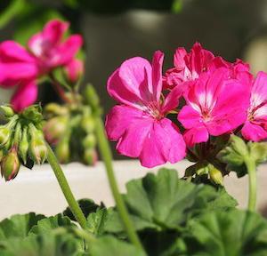 庭の花たちが大合唱しだした♪♪