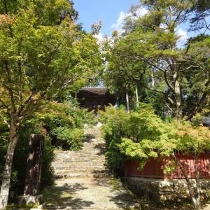 神護寺 茶会