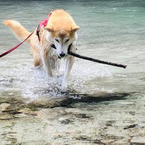 【山梨】精進ヶ滝で水遊び・3回目