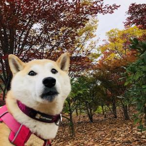 【山梨】みずがき湖ビジターセンターの紅葉