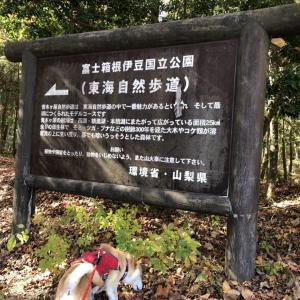 【山梨】秋の青木ヶ原樹海散歩