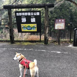 【三重・奈良・和歌山】瀞峡でガイド付き船旅
