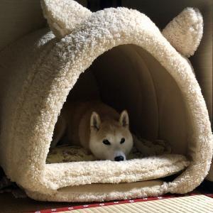 【PEPPY冬用ベッド】抗菌防臭ふんわりアニマルベッド購入