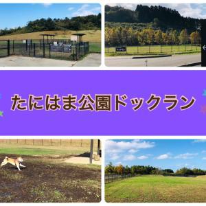 【新潟県】たにはま公園のドッグラン