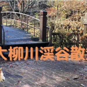 【山梨】大柳川渓谷を散策