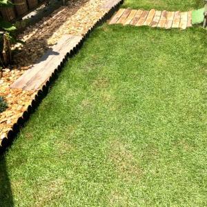 天然芝を張り替えてから2ヶ月経過