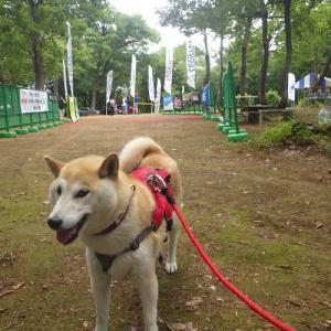 【新潟】おぐに森林公園キャンプ場1日目(散策・車中泊準備・温泉施設)